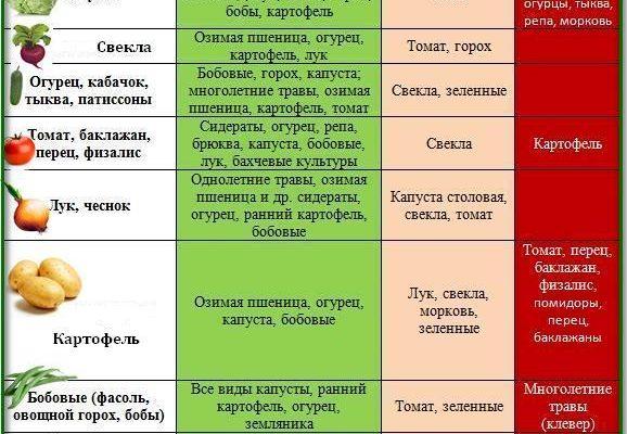 Таблица смешанной посадки овощей