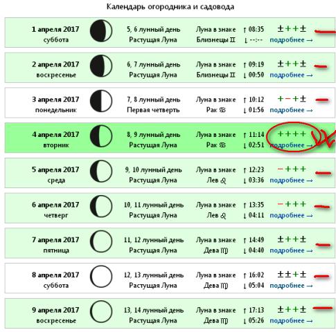 Посадка помидоров в июне по лунному календарю
