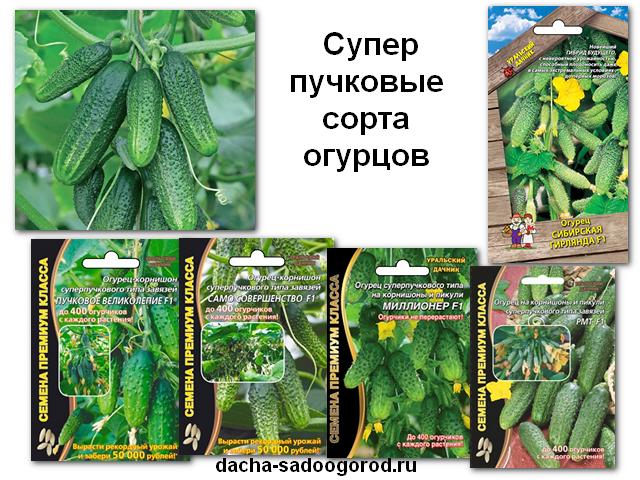 Сорта огурцов для зимнего выращивание 187